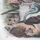 DETAILS 07   Seashell - Shellfish - Butterfly - Psyché - Psychode - Ptérocère