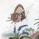 DETAILS 01   Insects - Fish - Butterfly - Swordfish - Sturgeon - Erotyle - Erycine