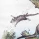 DÉTAILS 02 | Marsupiaux - Phalanger - Insectes - Phaenicocère - Champignon - Pezize