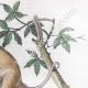 DÉTAILS 04 | Marsupiaux - Phalanger - Insectes - Phaenicocère - Champignon - Pezize