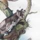 DÉTAILS 05 | Marsupiaux - Phalanger - Insectes - Phaenicocère - Champignon - Pezize
