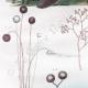 DETAILS 02   Plant - Verbascum - Mushroom - Fish - Mole