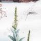 DETAILS 05   Plant - Verbascum - Mushroom - Fish - Mole