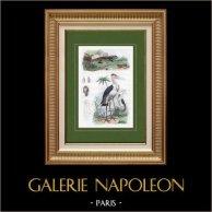 Fågel - Marabout - Kräldjur - Reptiler - Leguan - Ödlor - Snäckskal - Skaldjur - Marginelles | Original stålstick. Anonymt. Akvarell handkolorerad. 1836