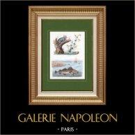 Poisson - Gade Morue - Cabillaud - Singe - Galago
