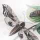 DETAILS 01 | Butterfly - Smerinthes - Seashell - Shellfish - Molluscs - Mollusk - Solen