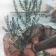 DETAILS 03 | Butterfly - Smerinthes - Seashell - Shellfish - Molluscs - Mollusk - Solen