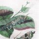 DETAILS 04 | Butterfly - Smerinthes - Seashell - Shellfish - Molluscs - Mollusk - Solen