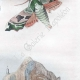 DETAILS 05 | Butterfly - Smerinthes - Seashell - Shellfish - Molluscs - Mollusk - Solen