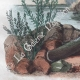 DETAILS 07 | Butterfly - Smerinthes - Seashell - Shellfish - Molluscs - Mollusk - Solen