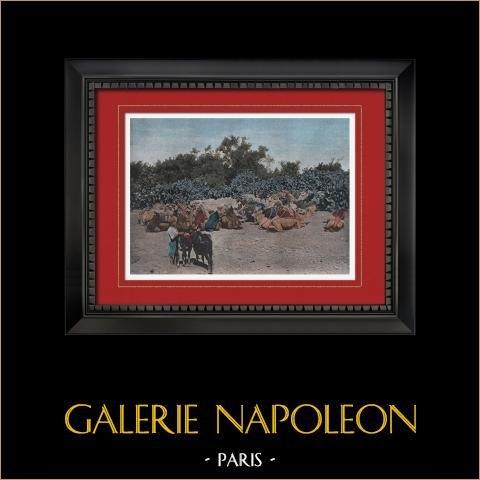 Tripolis - Karawane von Altweltkamelen (Libyen) | Original photochromdruck gestochen von Gillot. 1890