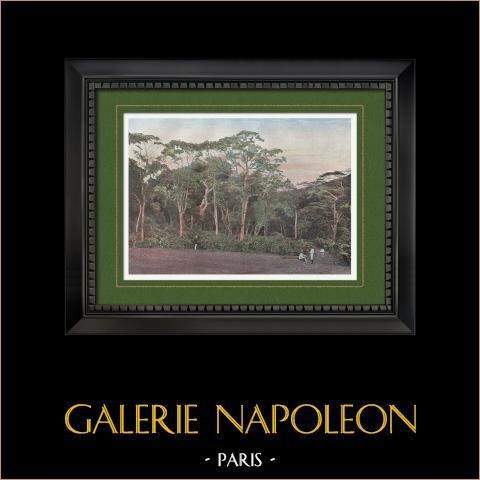 Nouvelle-Calédonie - Plantation de Caféiers (France) | Gravure en photochromie originale gravée par Gillot. 1890