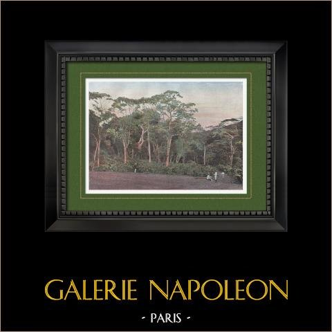 Nueva Caledonia - Plantación de Cafetos (Francia) | Original fotocromo grabado grabado por Gillot. 1890