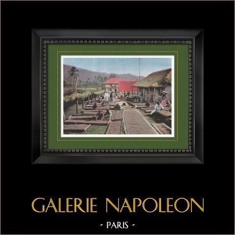 Nowa Kaledonia - Kolekcja Kawy - Handel - Canala - Zagraniczna Territoriy (Francja) |