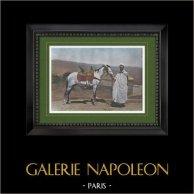 North Africa - Arabian horse