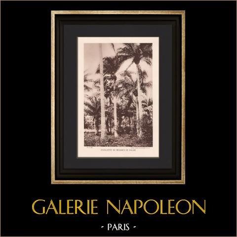 Palm nuts Gathering (Côte d'Ivoire - West Africa) | Original heliogravure. Anonymous. 1934
