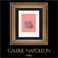 Collection du Cabinet Secret - Erotica - Zoophilie - Le Satyre et la Chèvre | Impression sur papier velin. Anonyme. 1959
