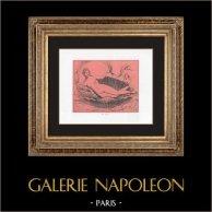 Collection of the Secret Cabinet - Erotica - Venus - Aphrodite - Female Nude