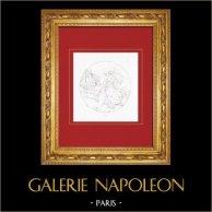 Mythologie - Mythologie grecque - Circé (Le Parmesan - Parmigianino) | Gravure sur cuivre originale gravée par Reveil. 1844