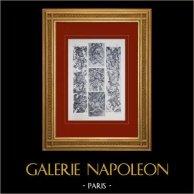Palacio de Versalles - Galerie des Glaces - Trophées d'armes (Buirette et Lespingola)