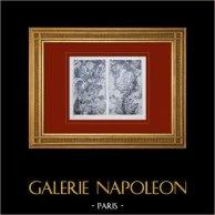 Palacio de Versalles - Galerie des Glaces - Trophées d'armes