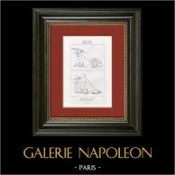 Mythologie - Cupidon - Génie des Courses - Cupidon maîtrisant les Tortues (Raffaello Sanzio dit Raphaël)
