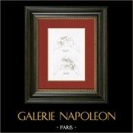 Story of Psyche - Attributes of Love and Jupiter (Raphael - Raffaello Sanzio)