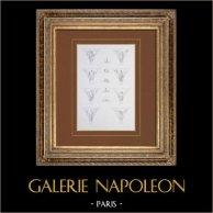 Ancien Hôtel de Ville de Paris - Galerie des Fêtes - Décoration - Voussures - Architecture