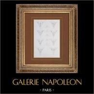Antique Paris City Hall  - Feast Galleria - Decoration - Vaults - Architecture