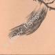 DETAILS 06   Japanese art - Sketch - Squirrel and Crane (Tatshibana-Morikouni)