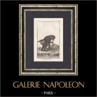 Singe - Petit Papion - Babouin - Mammifères - Primates | Gravure originale en taille-douce sur cuivre gravée par Jourdan. 1801