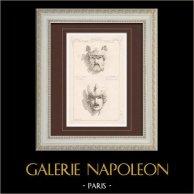 Maschera - Opéra Garnier - Palais Garnier (Charles Garnier - Chabaud)