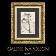Fables d'Ésope - Le Corbeau et le Renard (Ernest Griset) | Gravure sur bois originale dessinée par Griset. 1875