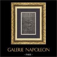 Fables d'Ésope - Le Sapin et le Buisson (Ernest Griset) | Gravure sur bois originale dessinée par Griset, gravée par Pannemaker. 1875