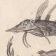 DÉTAILS 01   Océanie - Poissons et Serpents - Trigle-Lyre - Marteau - Coffret triangulaire - Python colossal