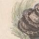 DÉTAILS 03   Océanie - Poissons et Serpents - Trigle-Lyre - Marteau - Coffret triangulaire - Python colossal