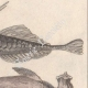 DÉTAILS 04   Océanie - Poissons et Serpents - Trigle-Lyre - Marteau - Coffret triangulaire - Python colossal