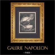 L'Enfer de Dante - Gustave Doré - Chapitre LXIV - Les Géants - Nimrod