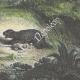 DÉTAILS 06 | Gran Chaco - Indiens attaqués par un jaguar (Amérique du Sud)