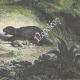DÉTAILS 08 | Gran Chaco - Indiens attaqués par un jaguar (Amérique du Sud)