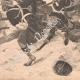 DÉTAILS 04 | Bataille de Tel el-Kebir - Kassassin - Egypte - Guerre Anglo-égyptienne (13 September 1882)