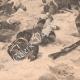 DÉTAILS 06 | Bataille de Tel el-Kebir - Kassassin - Egypte - Guerre Anglo-égyptienne (13 September 1882)