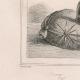 DÉTAILS 04 | Ancien Chevalier - Casque et éperons de Saint Olaüs