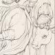 DETAILS 06 | Italian Renaissance - Madonna - Saint Luke Painting the Virgin and the Infant Jesus (Raffaello Sanzio or Raphael)