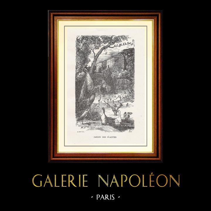 Antique Prints & Drawings | View of Paris - Historical Monuments of Paris - Botanical Garden created by Buffon - Jardin des Plantes | Wood engraving | 1867