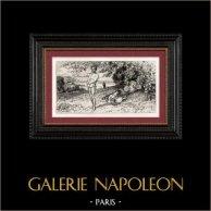Gargantua et Pantagruel - Et tout pour la Trippe (Rabelais) | Gravure sur acier originale. Anonyme. [Tiré à part]. 1840
