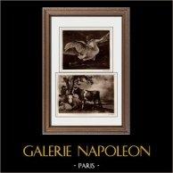 Cisne que Defiende a su Nidada (Jan Asselijn) - El Toro (Paul Potter) | Original helio grabado sobre papel vitela según Jan Asselijn & Paul Potter. Anónimo. 1910