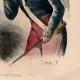 DÉTAILS 03   Uniforme Militaire - Costume - Guerres Napoléoniennes - Soldat Fantassin - Types d'Infanterie