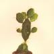 DETAILS 02   Botany - Vegetable - Plants and Flowers - Succulent - Cactus (5)