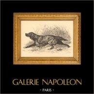 Fiske och Jakt - Album de la Chasse Illustree - Jakthund | Original trästick efter teckningar av Huyot, graverade av Bellecroix. 1880